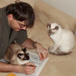 Kočka na tři
