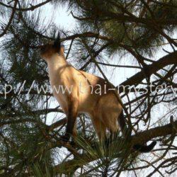 Falco na své stromové vyhlídce